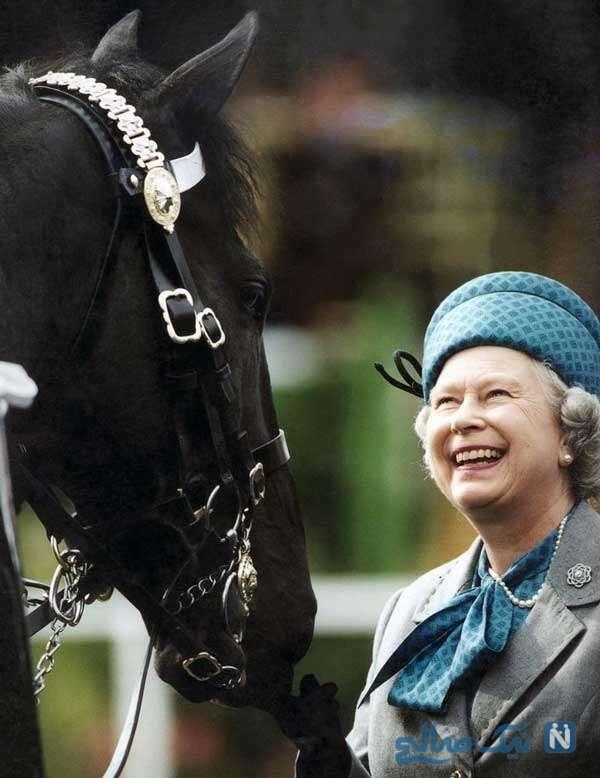 اسب های ملکه