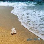 وسایل مورد نیاز در ساحل