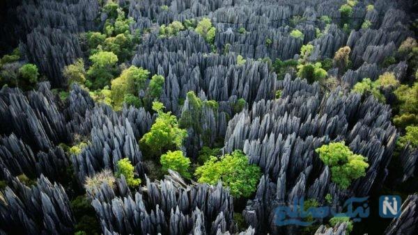 جنگل سنگی در چین