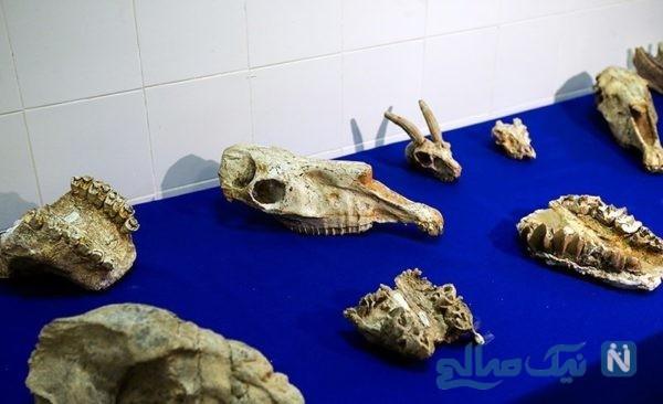 موزه فسیل