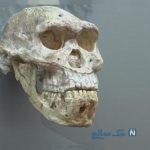 راهاندازی موزه فسیل در کرمان
