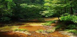 پارک ملی لمبیر هیلز مالزی +تصاویر