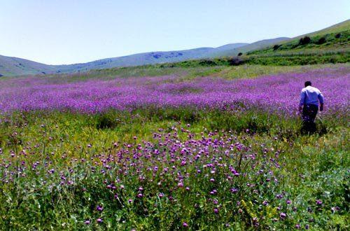 روستای اردبیل