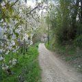 سفر به روستای آلمانی رشت طبیعتی بی نظیر و زیبا+تصاویر