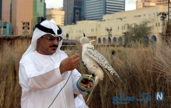 جشنواره امارات