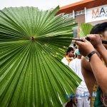 این جشنوارهی وحشتناک در تایلندبرگزار میشود / دانستنیهایی برای سفر به تایلند+تصاویر 