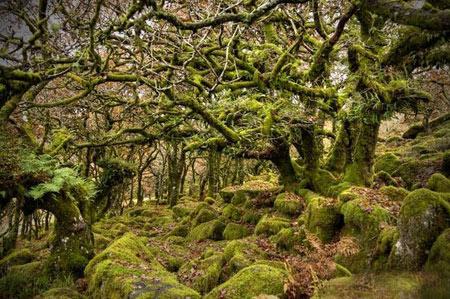 جنگل اسرارآمیز ویستمن در انگلیس + تصاویر