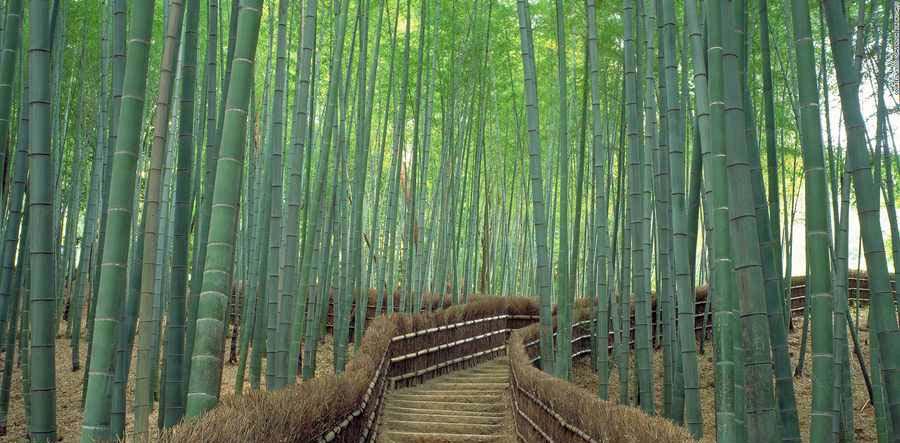 معبدی بسیار دیدنی در ژاپن که برای دیدنش باید ۱۰۱۵ پله را به بالا بروید +تصاویر