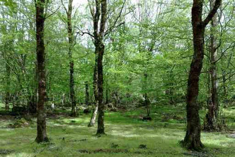 سفری یک روزه به پارک جنگلی باغو با طبیعتی بسیار زیبا+تصاویر