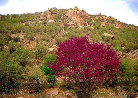 دره ارغوان ایلام ، بهشت رنگها+تصاویر