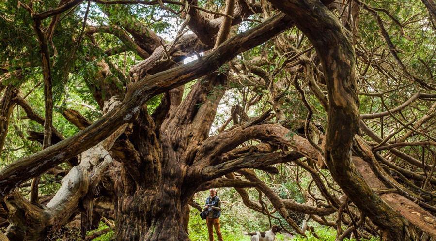 کینگلی وله جنگلی اسرارآمیز و تاریخی در انگلستان+تصاویر