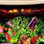تغذیه در سفر مهمترین اصل در حفظ سلامتی در مسافرت + تصویر