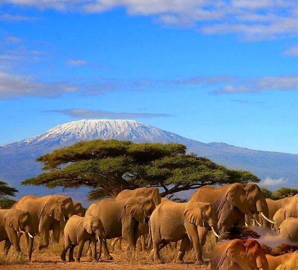 کشور تانزانیا نگین همیشه سبز شرق آفریقا با طبیعت زیبایش + تصاویر