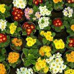 بازارهای گل تهران را در اردیبهشت زیبا بیشتر بشناسید + تصاویر