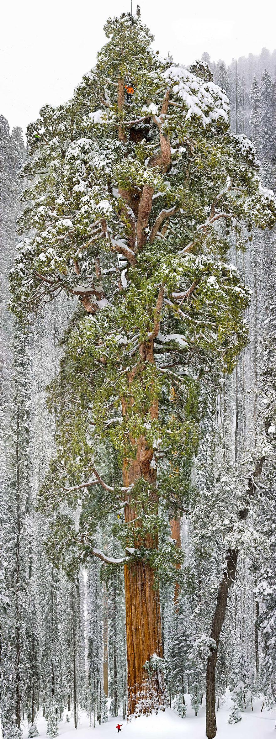 رویایی ترین درختان جهان