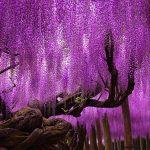 رویایی ترین درختان جهان که از نظر شکوه بینظیرند+ تصاویر