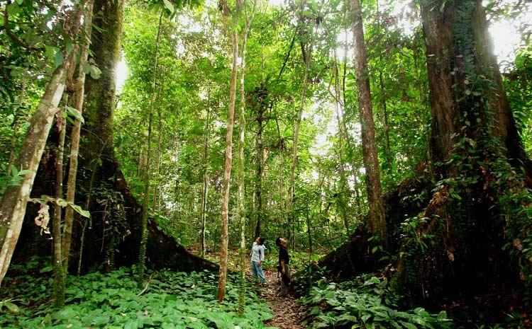 راهنمای سفر به جزایر پرهنتیان