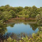 جاذبه جنگل حرا جنگلی پنهان در اعماق آبهای گرم خلیج فارس