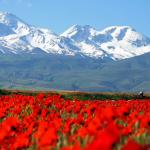 دشت شقایق کالپوش در سفری اردیبهشتی به استان سمنان