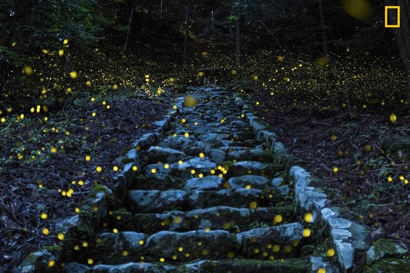 برگزیدگان مسابقه عکاسی سفر نشنال جئوگرافیک معرفی شدند