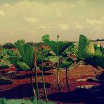راهنمای سفر به بندرانزلی – Travel guide to Bandar Anzali