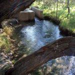 طبیعت گردی لذت بخش در زیبایی های چشمه گیلاس