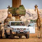 باغ وحش العین امارات از باغ وحشهای معروف امارات