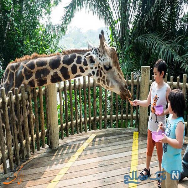 معرفی باغ وحش دوزیت بانکوک با ۲۰۰۰ حیوان محلی و جهانی
