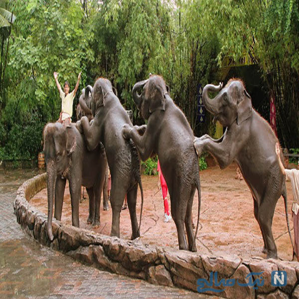 باغ وحش دوزیت بانکوک