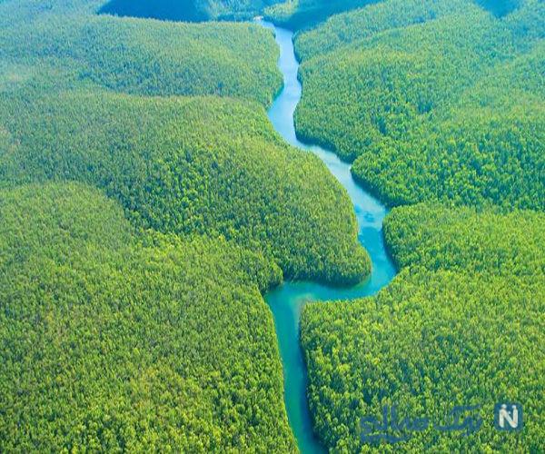 حقایق عجیب در باره جنگل آمازون از عجایب هفتگانه جهان
