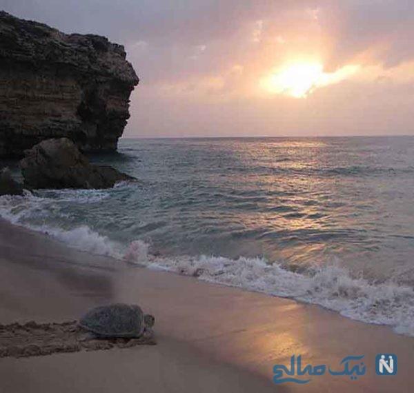 راس الجنز (Ras al Jinz) از جاذبه های گردشگری عمان