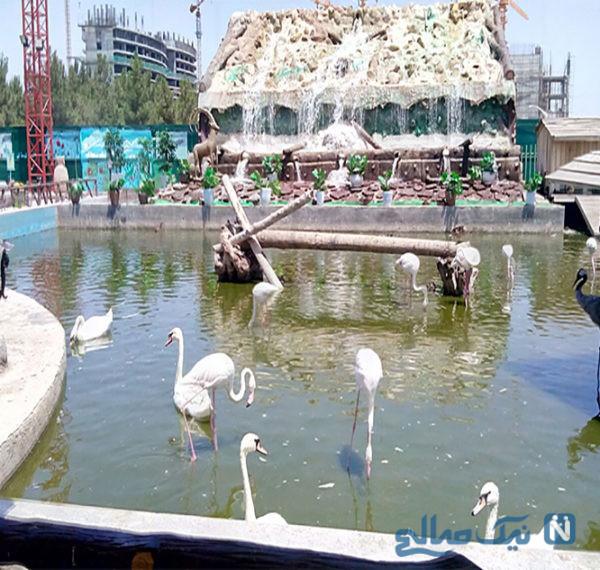 باغ پرندگان مشهد ، گشت و گذاری در طبیعت