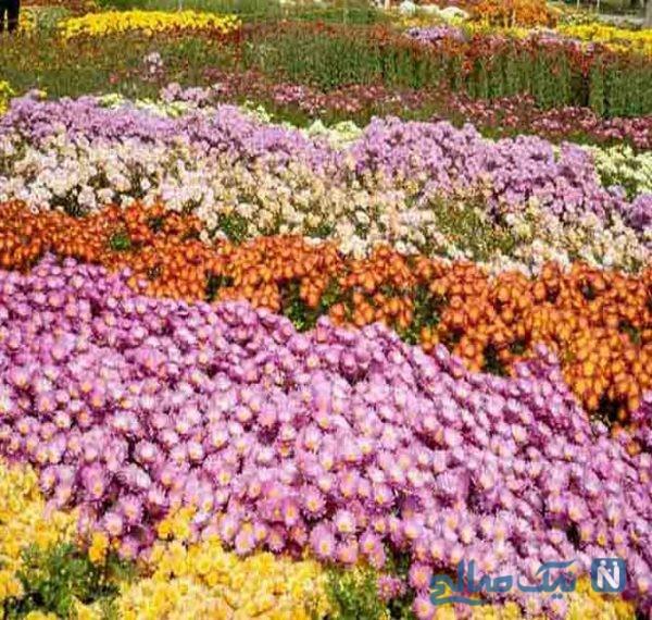 باغ گیاه شناسی ، کلکسیونی از نادرترین گیاهان دنیا