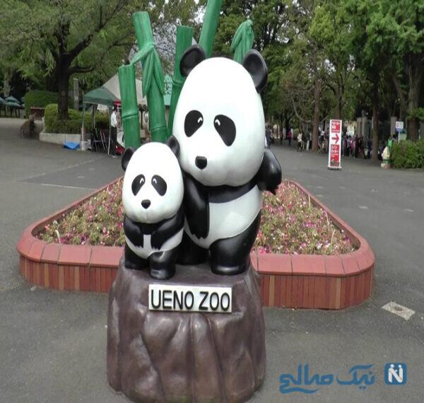 پارک و باغ وحش اوئنو (Ueno Park & Zoo)