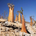 آشنایی با جاذبه های گردشگری یمن