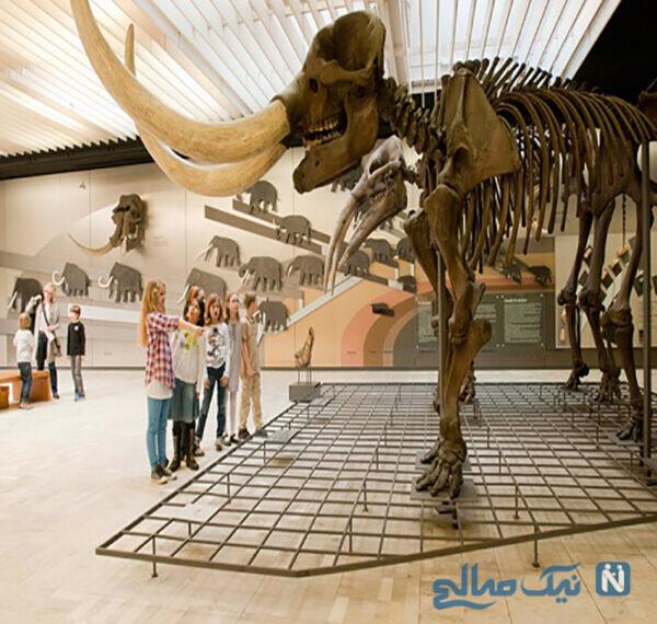 موزه تاریخ طبیعی