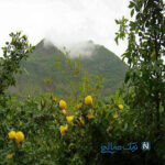 معرفی جاهای دیدنی بانه کردستان و جاذبه های گردشگری آن