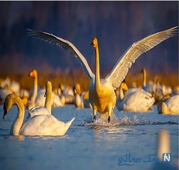 دامگاه پرندگان ازباران و سوته