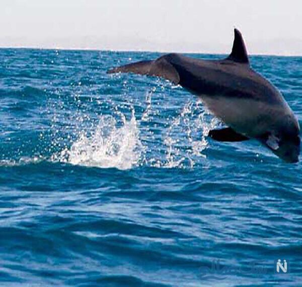 دلفین های بازیگوش