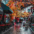 تور استانبول پاییز ۹۹ و ربودن گوی سبقت ، از تور مشهد و تور کیش