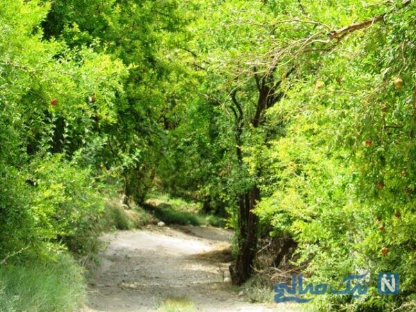 جاذبه های نور آباد ممسنی