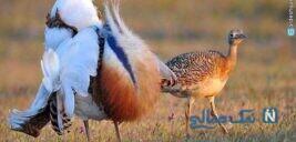 جاهای دیدنی بوکان آذربایجان غربی