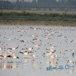 جاذبه های گردشگری نقده در آذربایجان غربی