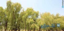 دیدنی ترین جاذبه های گردشگری شهرستان کهنوج