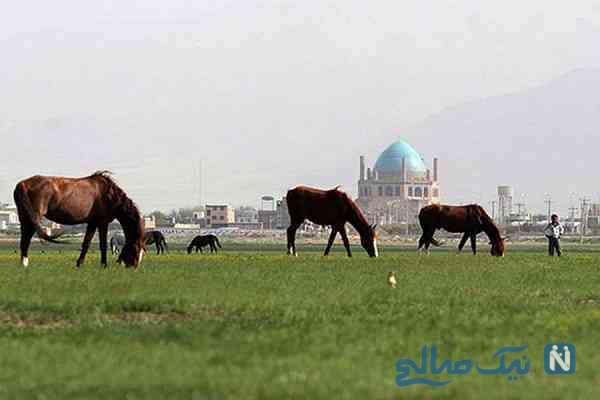 جاهای دیدنی سلطانیه زنجان