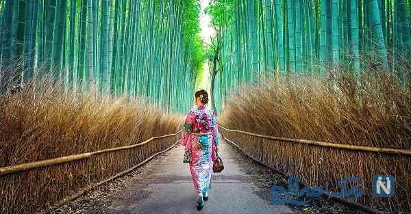 جاهای دیدنی کیوتو