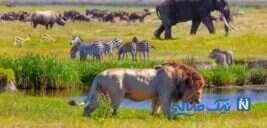 شگفت انگیزترین جاهای دیدنی تانزانیا