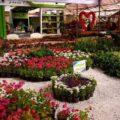 باغ گل محلات یا هلند ایران را بشناسید