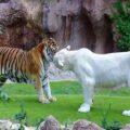 جاذبه های باغ وحش تهران