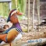 باغ پرندگان تهران جاذبه ای زیبا در پایتخت